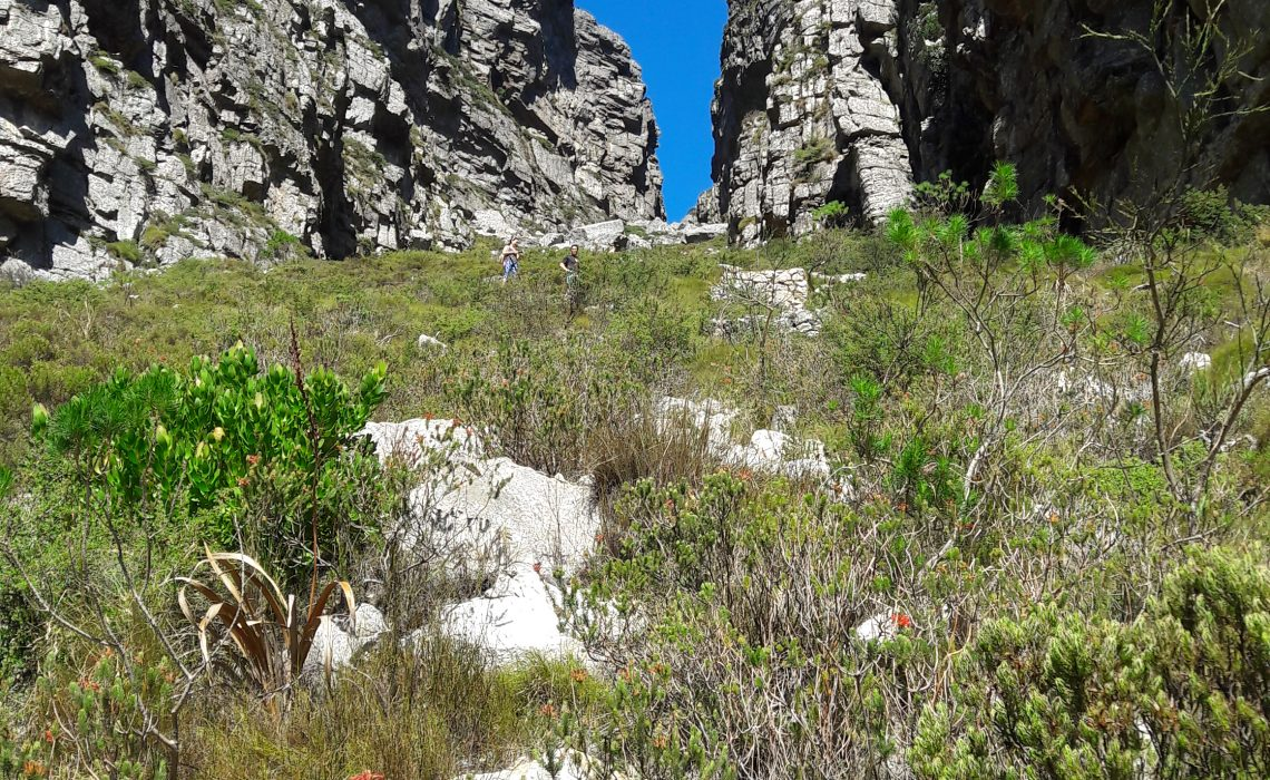 Table Mountain - Afrique du Sud