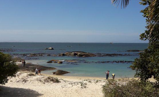 Boulders Beach - Simons Town, Afrique du Sud