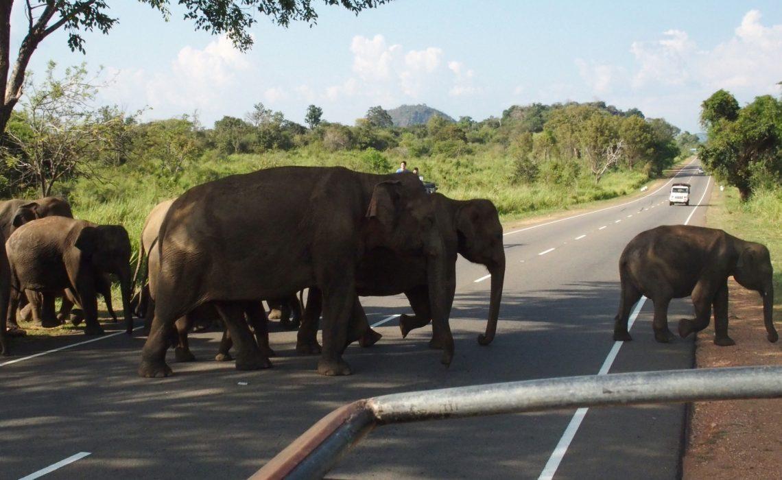 la traversée des éléphants