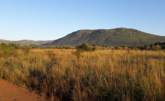 Paysage Pilanesberg