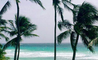 Palmier et plage de Barbade