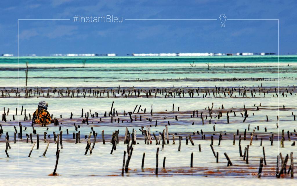 plage au Zanzibar - fonds d'écran