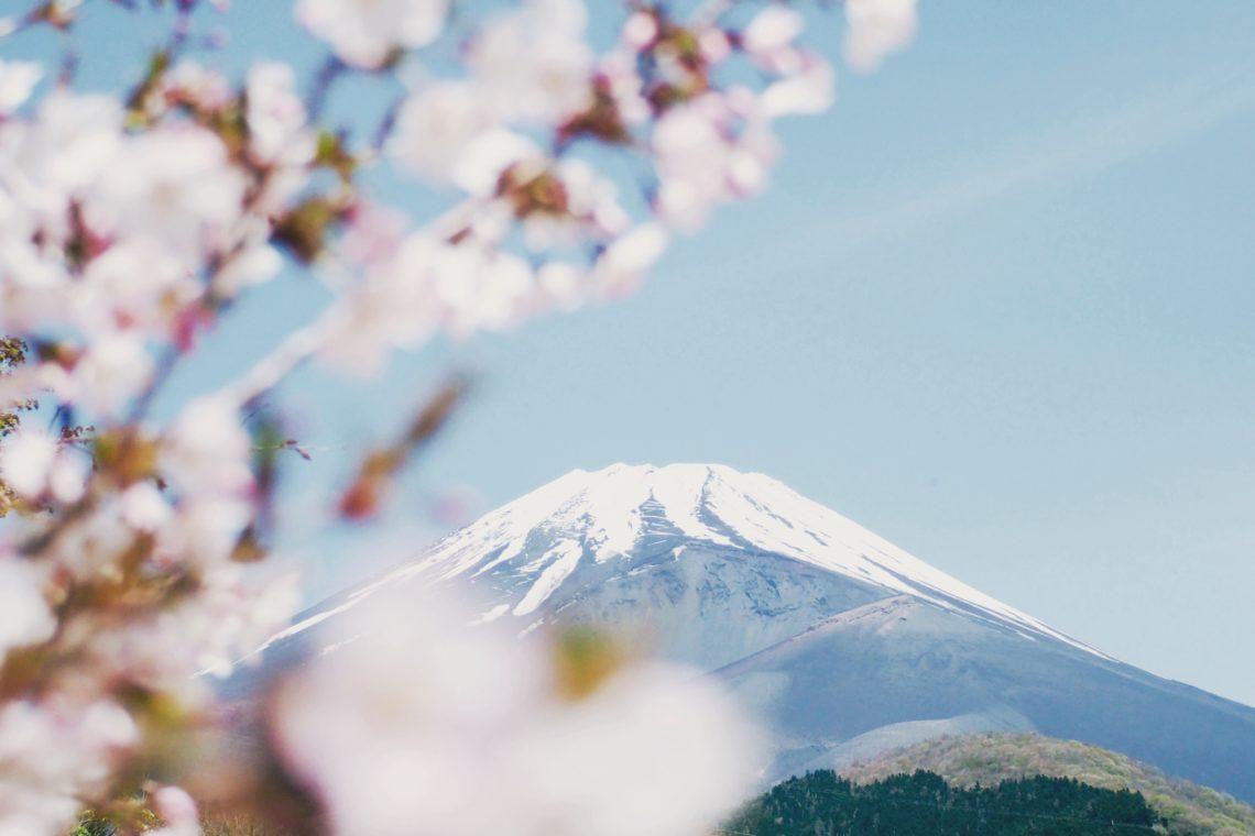 japon en fleurs