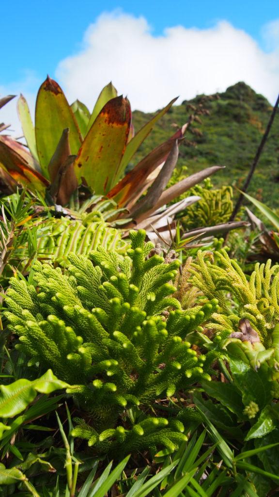 Végétation - Soufrière
